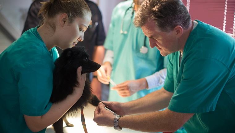 Общий анализ крови животных